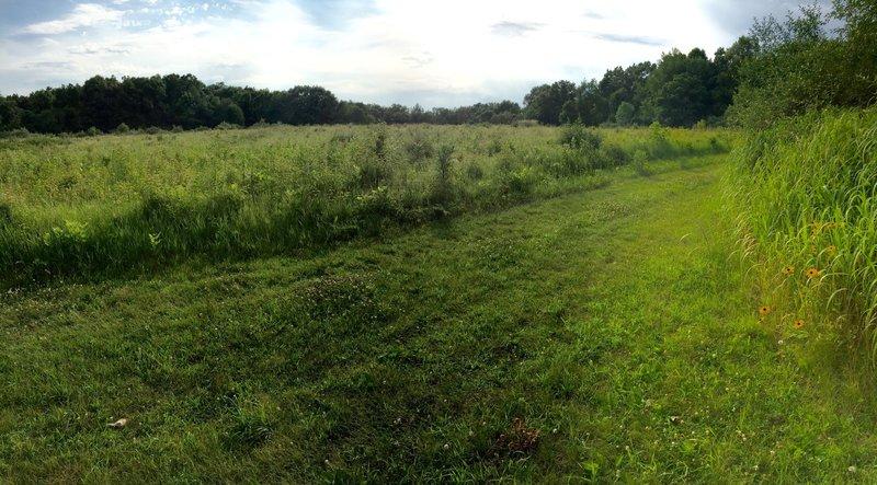 Bluebird prairie where the Bird Blind Loop and Blue Bird Trail intersect.