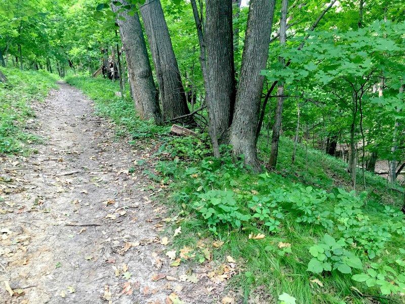 Bird Blind Trail.