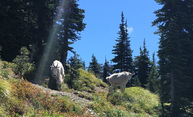 Another shot of the protectors of the trail.