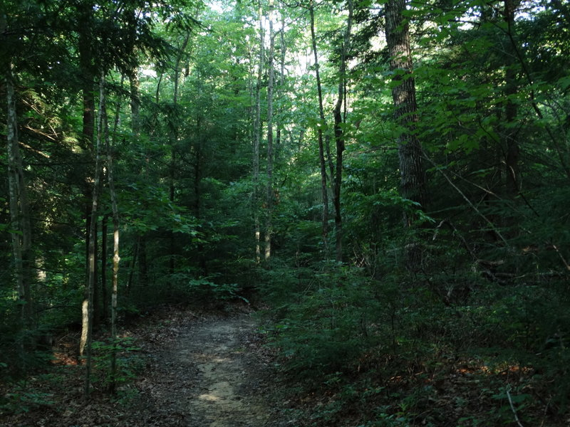 Sheltowee Trace into the Forest.