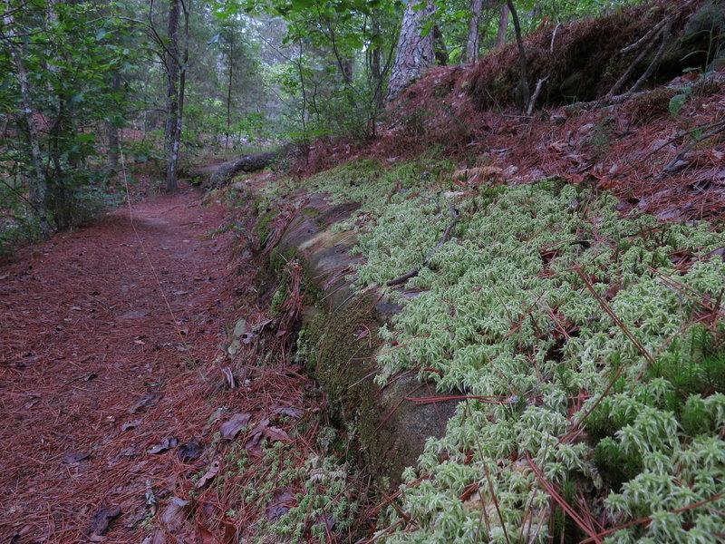 Trail along small creek.