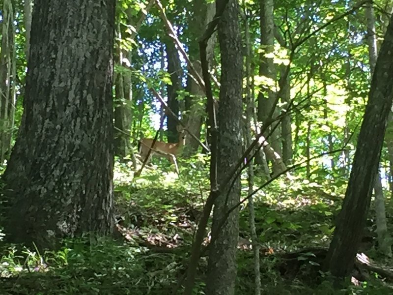 Deer and other wildlife abound on this trail.