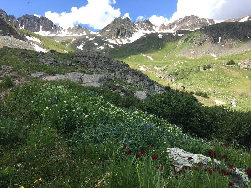 Wildflowers from Handies Peak's southwest slopes.