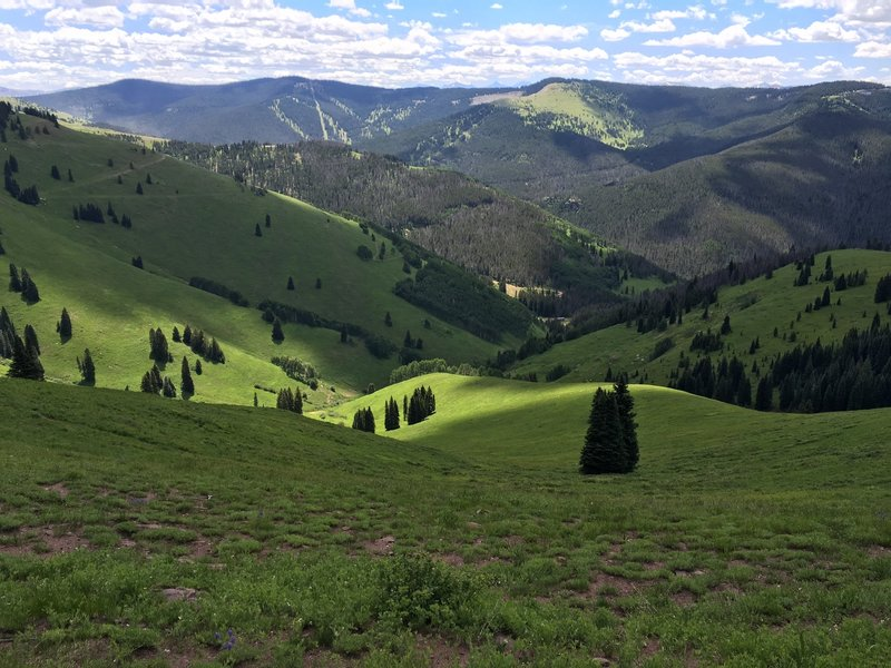 View from Ptarmigan Loop of Vail's Back Bowls.