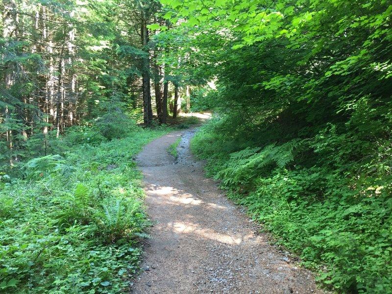 Beginning of June Lake Trail.