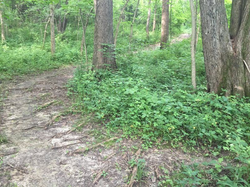 Forested section of Prairie View Nature Trail.
