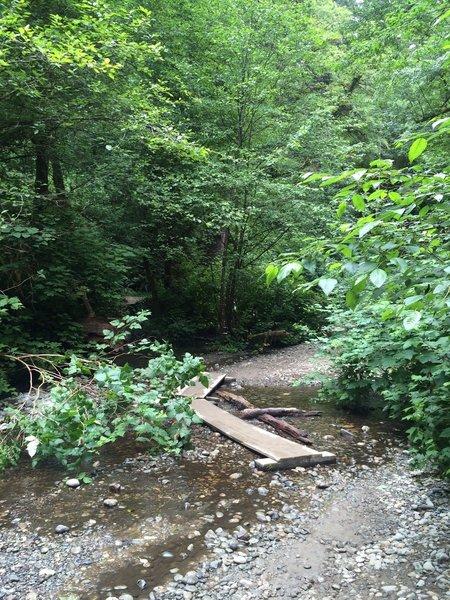 Summer stream crossings in Fern Canyon.
