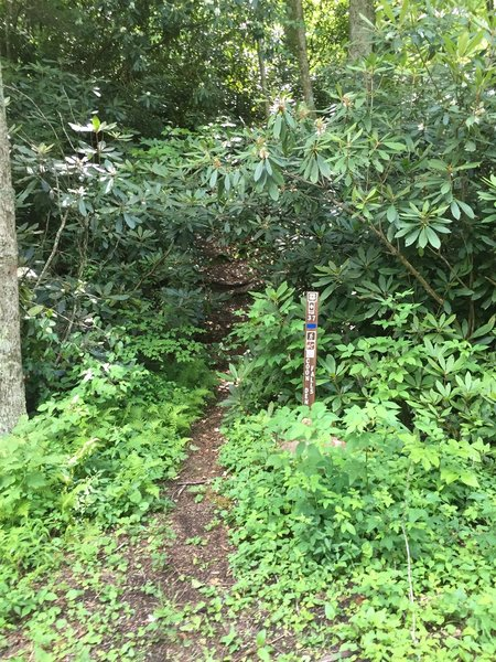 The beginning of Coon Den Trail.
