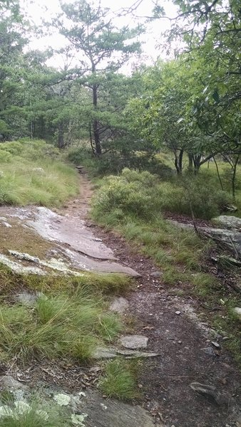Section of trail slightly before Cook's Wall.
