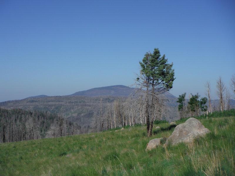 Redondo Peak looking west into the Valles Caldera.