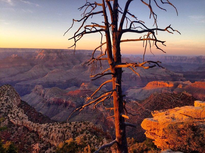 Grand Canyon South Rim - Grandview Point.