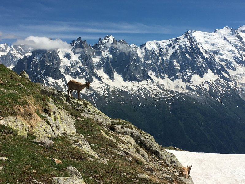 Ibex in the Flegere ski area.