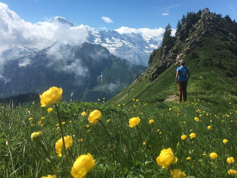 Shynige Platte is the widerflower winner of the Jungfrau area.