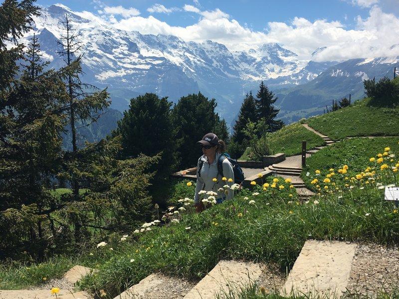 "The wildflower study gardens - the ""Alpengarten"""