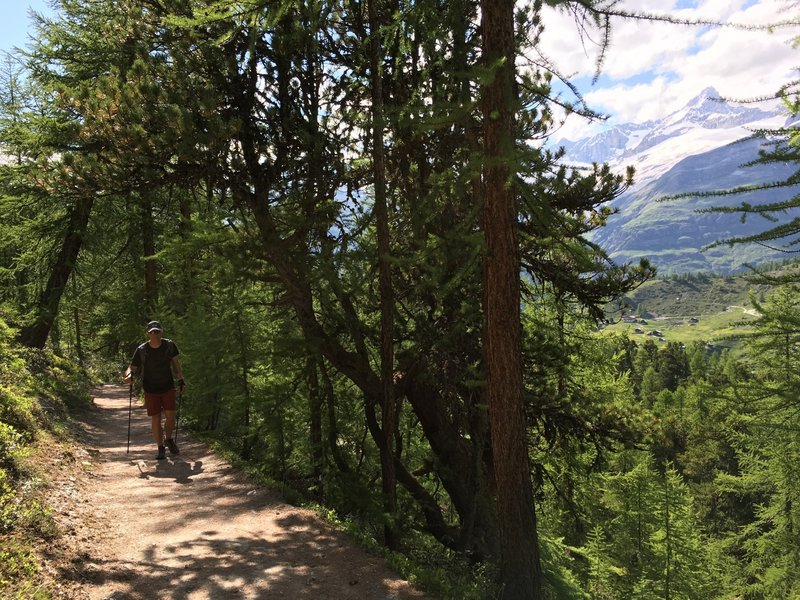 A lovely wooded section of trail is a good break from the sunny open slopes.