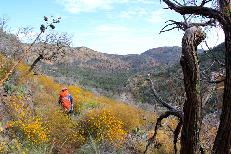 California goldfield paints on the trail.
