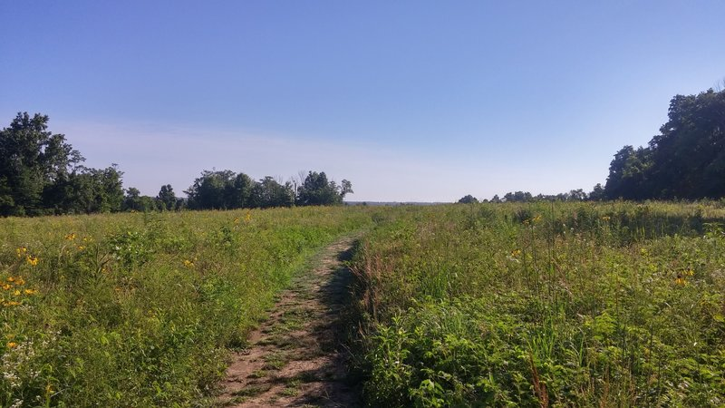 The trail going through the wildflowers in the grasslands.