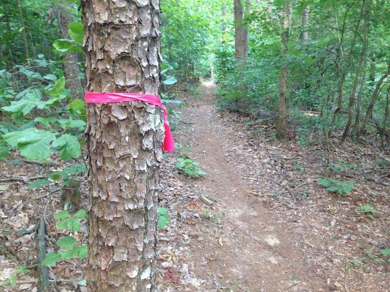 Main trail is marked with pink ribbon.