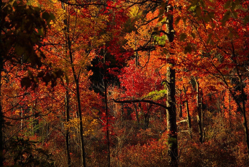 Rattlesnake Swamp colors. with permission from Jean Drescher