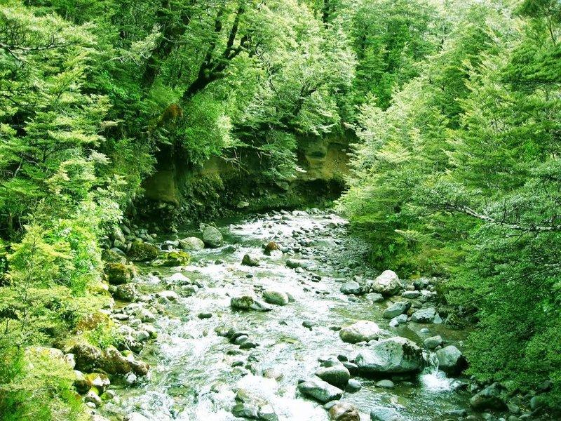 Wairere Stream from Bridge - Lower Taranaki Falls Track