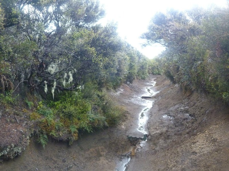 Pretty standard section of rough trail between Waihohonu and Tama Saddle