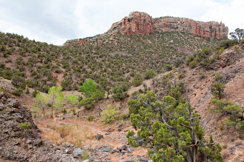 No Thoroughfare Canyon above the first pool with permission from Peter B. Pearman