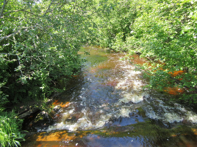 Washington Creek from the bridge.