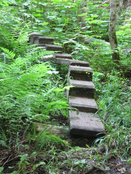 Stepped planks over wet hillsides of West Huginnin Cove Trail.