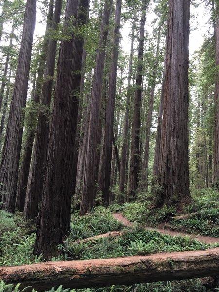 Boy Scout Tree Trail on Jul 16, 2016.
