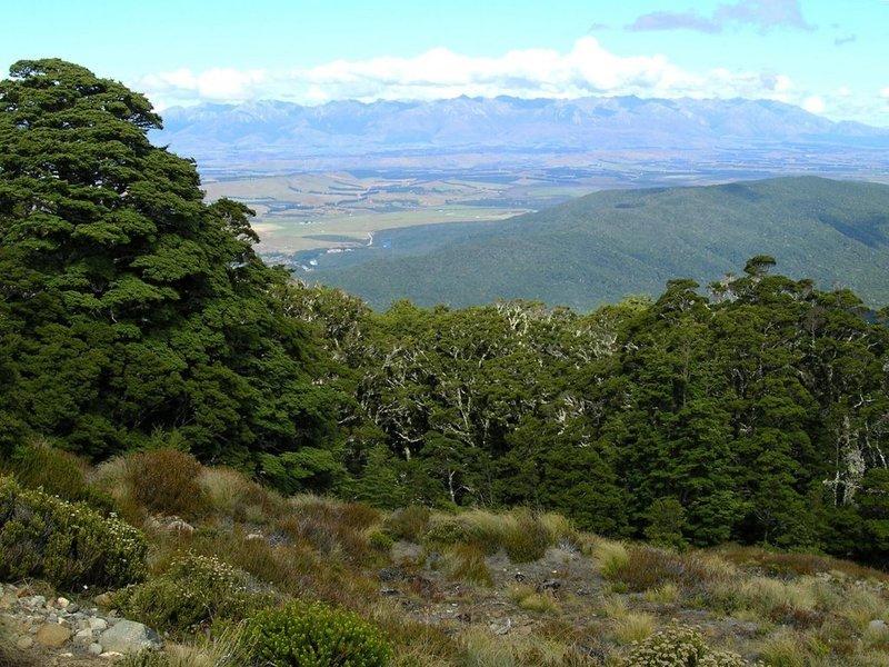 Above the treeline on the Luxmore grunt.