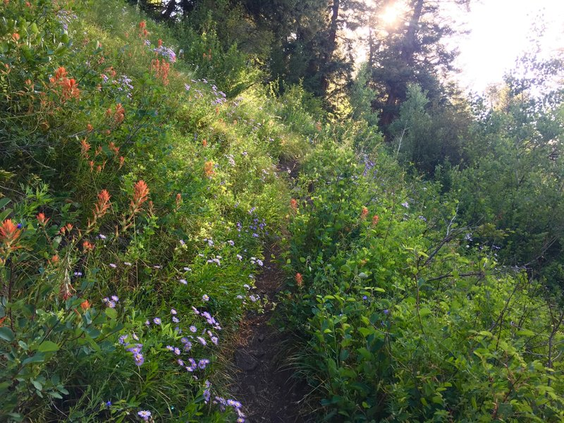 Wildflowers taking over the trail!