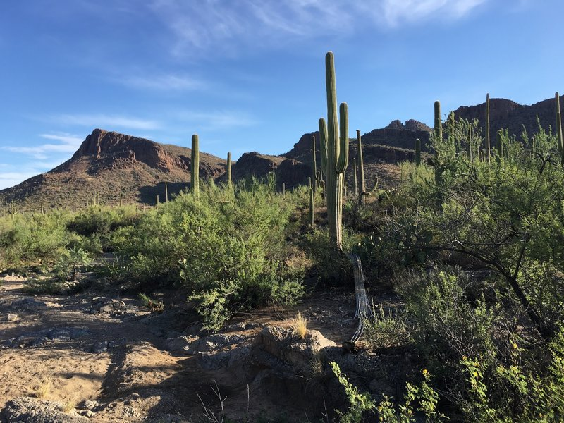 Views from the Panther Peak Wash trail looking at rugged Tucson Mountains.