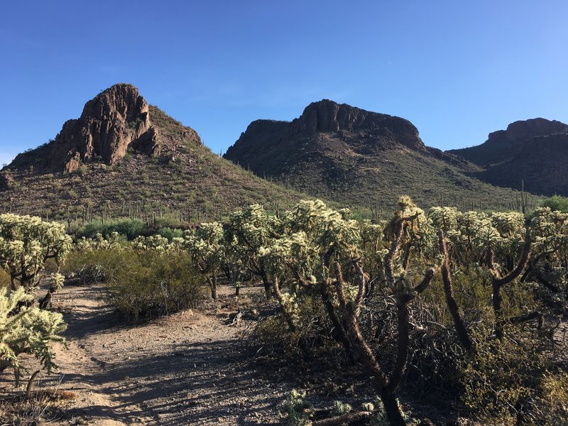 Take in the great views from the Roadrunner trail, but watch out for chollas on the north end of the trail.