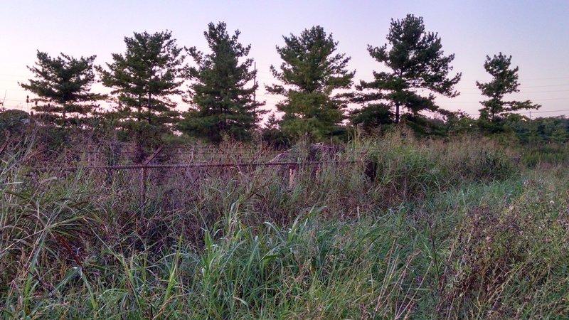 Future Farming Fields for Milkweed Plots
