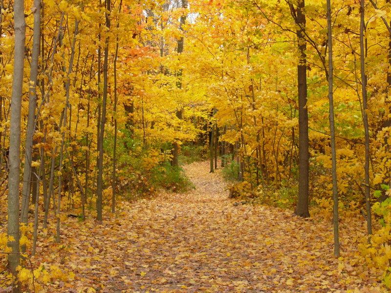 Pretty fall colors!