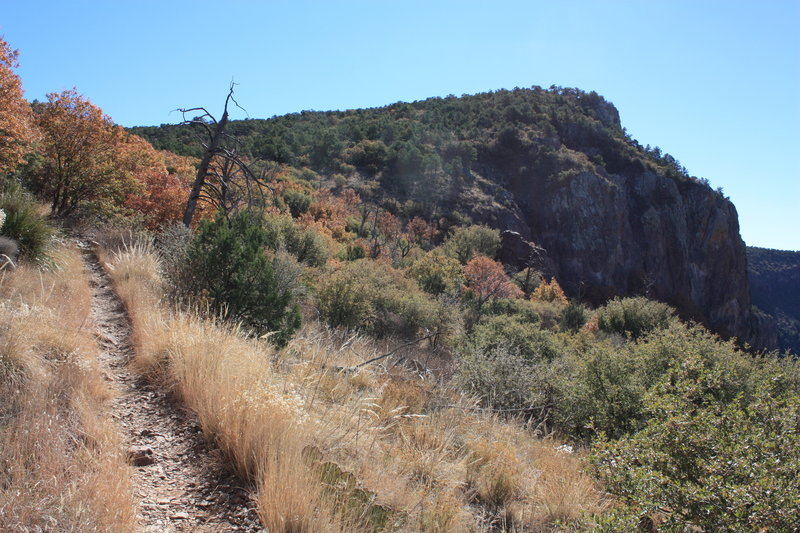 The Southwest Rim Trail through the dry grasses and cacti. with permission from Hobbes7714 Photo Credit: Andrew Wahr  Link: https://twitter.com/WahrAndrew