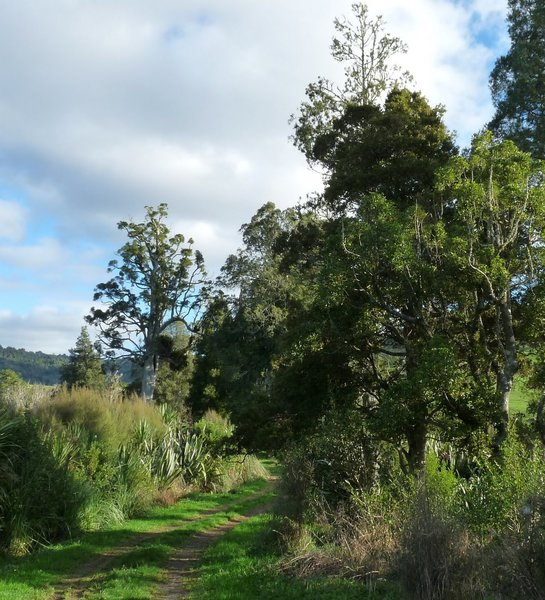 A typical section of trail along the Kaniwhaniwha: Nikau Walk along the Kaniwhaniwha Stream.
