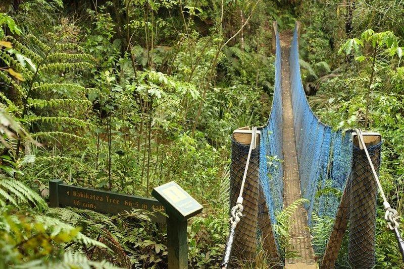 Swing Bridge at the stream confluence