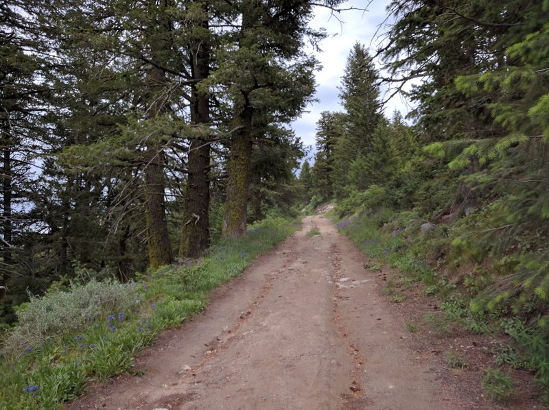 View from the trail (well, more of an old forest road).