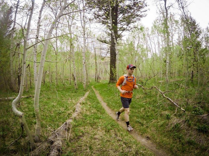 Running through a grove of aspens.