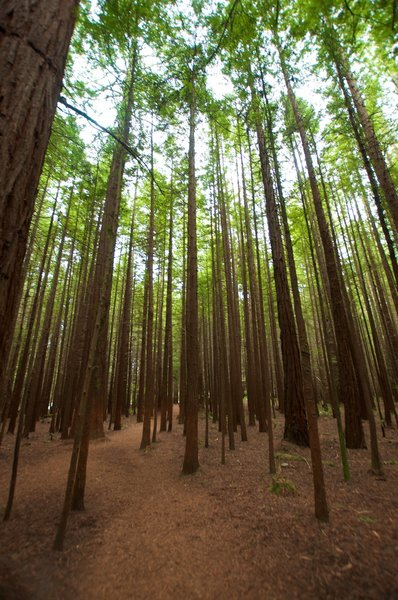 Trail through the trees.