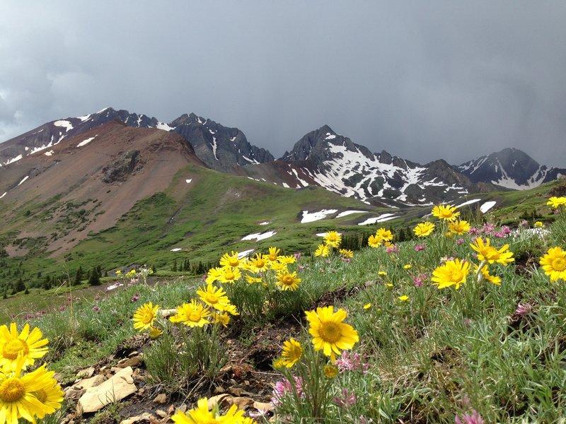 Looking across the valley to Mt. Wilson, El Diente, and Wilson Peak from Cross Mountain Trail #637.