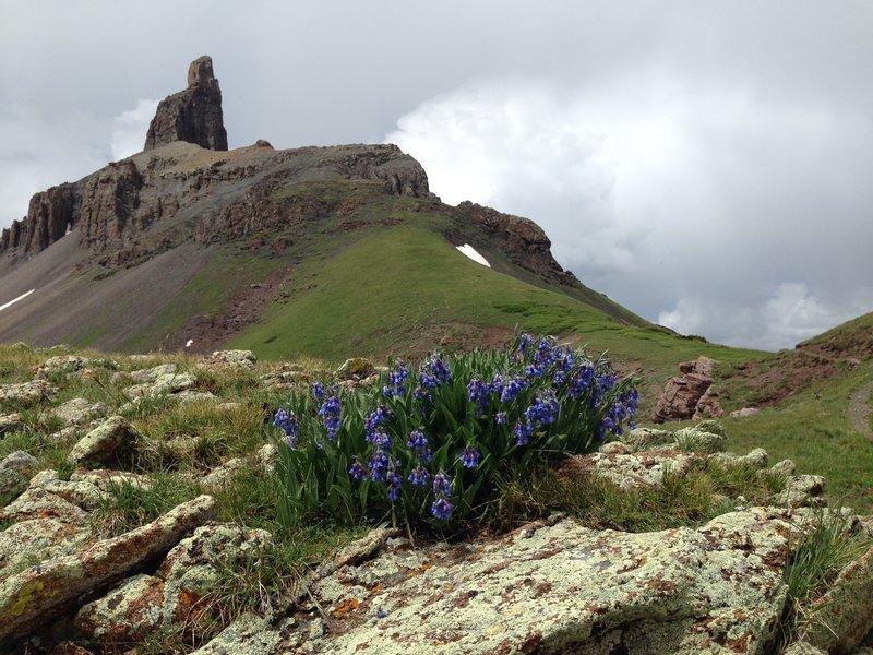 Wildflowers on the Lizard Head Trail #505 traverse towards Lizard Head.