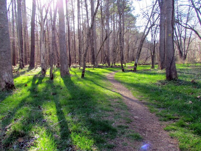 Laurel Bluffs Trail.