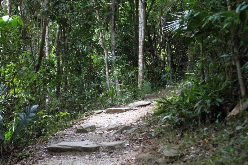 Reef Bay Trail, Virgin Islands National Park, St. John, US Virgin Islands (USVI). with permission from virt_