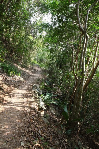 Heading up the Reef Bay Trail, Virgin Islands National Park, St. John, US Virgin Islands (USVI). with permission from virt_