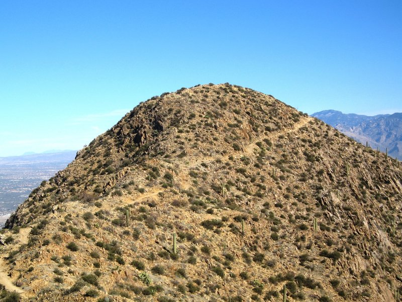 The summit of Wasson Peak rises above the last trail spur. with permission from John McCall