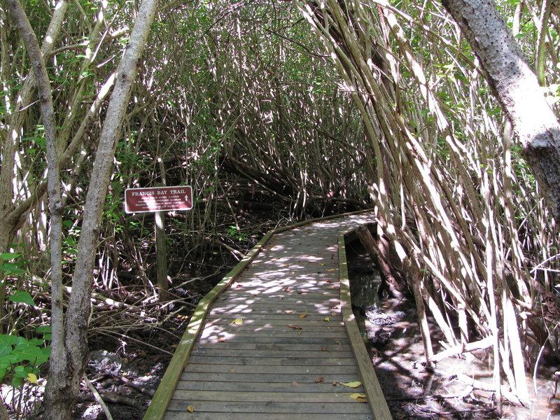 Boardwalk on Francis Bay Trail.