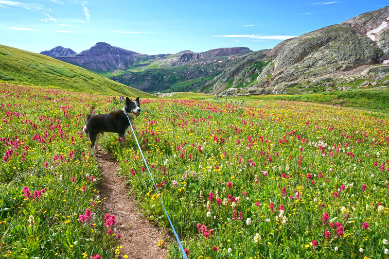 Easy going on the Colorado Divide Trail (CDT).