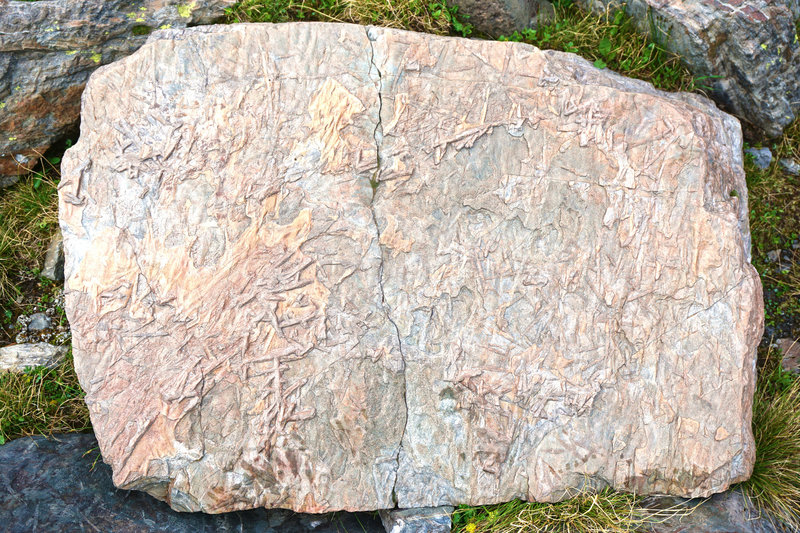 A very cool-looking ancient stone.